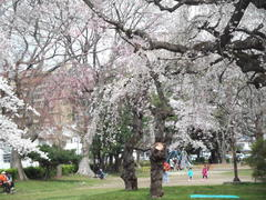 児童公園の桜&手作り市の品