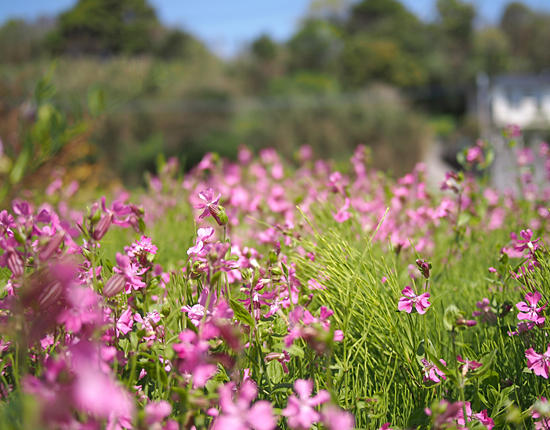 �t �� ��� �C �� �� Spring flowers wildflowers sea wind tide �摜