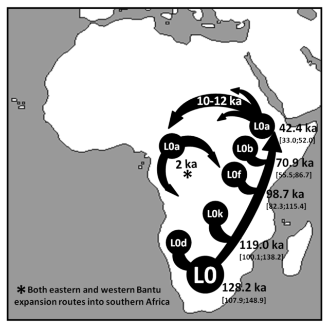 Schematic_representation_of_the_major_inferred_migrations_involving_mtDNA_haplogroup_L0.png