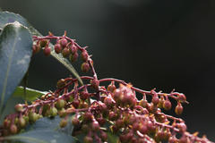 seeds or buds 木の実か蕾か