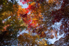 Autumn leaves world 紅葉の園