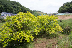 Fresh green season 新緑の季節