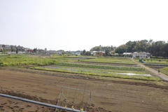 Green fields 田園風景
