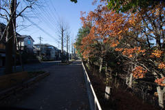 Morning walk 朝散歩