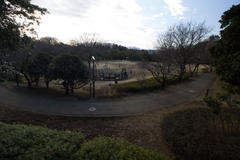 At the park 正月の公園