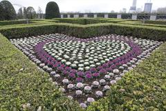 Heart-shaped flowerbed 花壇