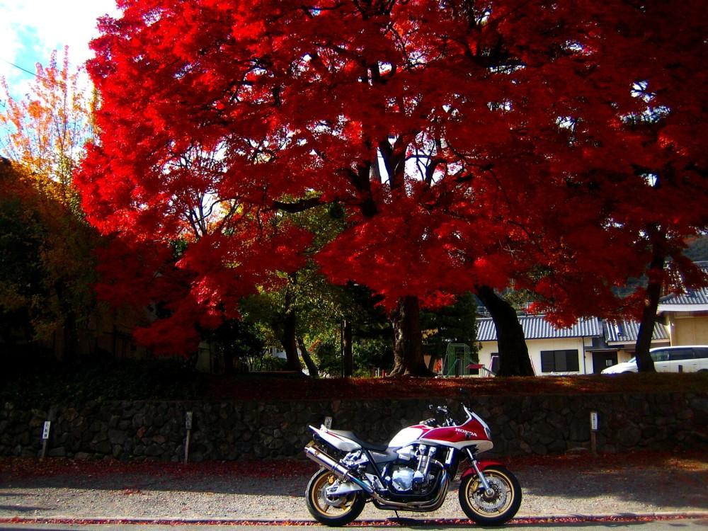 Bike Photo Collection-12- 〜紅葉とバイク�U〜