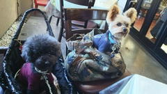 Dog Cafe プラスわん ここあ店長の営業報告 朝晩以外は春を実感した日