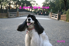 Happy New Year 2012 ☆