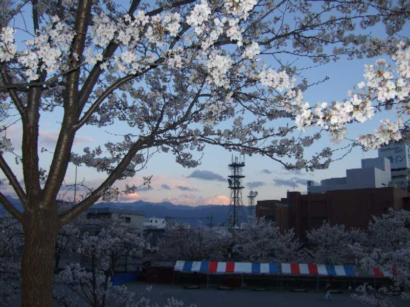 Apr 4, 2007 〜go to see cherry blossoms in a park