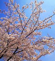 If winter comes,can spring be far behind 【2011】