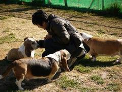 Basset Hound Meeting 2012 Autumn−うちの子編