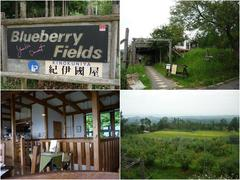 blueberry  fields  紀伊国屋