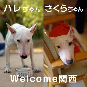 Welcome~♪
