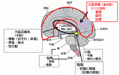 学習と脳 Learning and The Brain