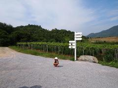 HuaHin Hills Vineyard(ペッブリー生活�D)