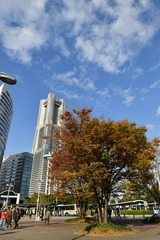 Autumn in YOKOHAMA