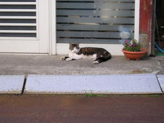 猫μ眠り猫two!? Cats photograph 11-2