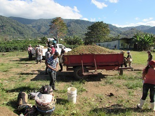 Coffee farm in Orosi Valley, Costa Rica (27 Jan.jpg