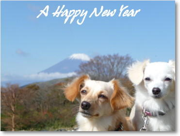 A Happy New Year ☆ 2010