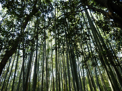 竹林の小径(Path of Bamboo in Arashiyama)
