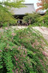 �^�@���̏H  Shin'nyodo Bush clover & Red spider lily
