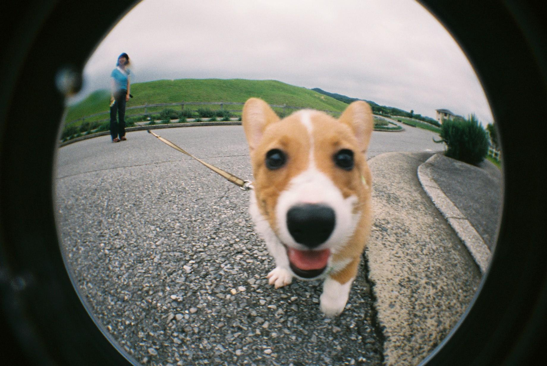 こぎわん - Corgi Wonderful! -