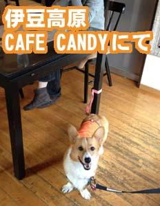 CAFE CANDY コーギー