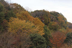 covered with colored leaves 七色に染まる七面山
