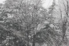 The snow is falling 雪が降る