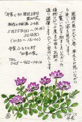 Plant Sketching Exhibition 四季の家で高橋長三郎植物スケッチ展 2013
