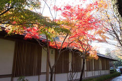 Red leaves 四季の家の紅葉