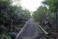 Rhododendron 高蔵寺 秋のしゃくなげ園