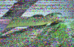 Program 106 of VOA Radiogram