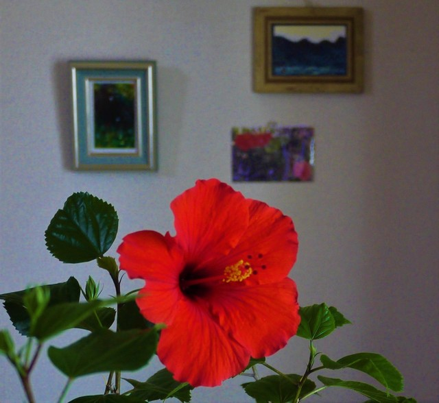 20191013 hibiscus red.JPG