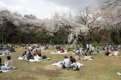 Cherry blossom viewing 三ツ池公園でお花見する人々