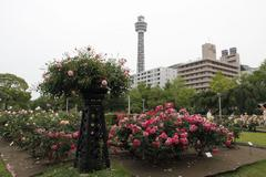 Rose and Marine Tower 横浜マリーンタワーと薔薇