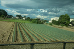 Fukaya Green onion Field 車窓 深谷ねぎ畑