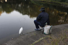 Little egret and foster father ふたりは親子の関係