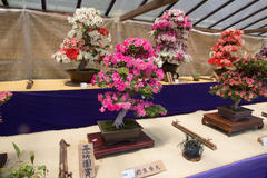 Azalea Bonsai Exhibition さつき盆栽展